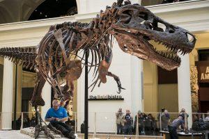 esqueleto de t-rex en The Field Museum Chicago