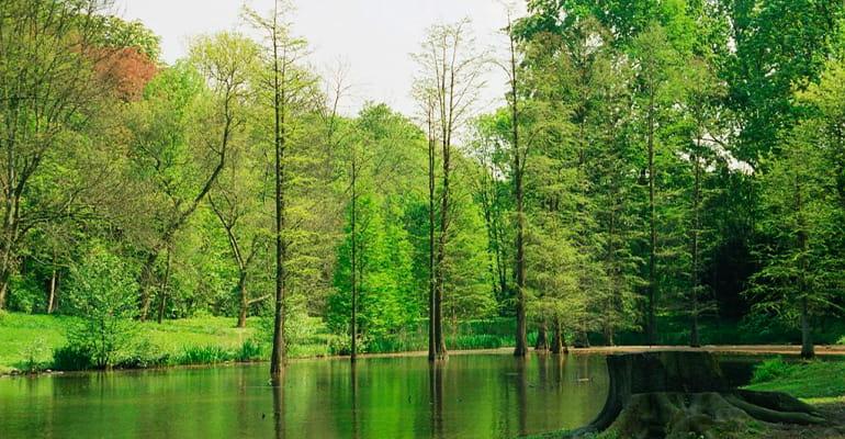 parque Rombergpark