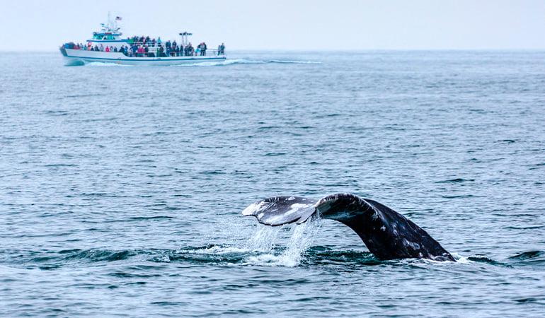 Avistamiento de ballenas en San Diego