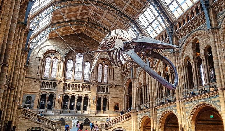 Natural History Museum, museo interesante de londres