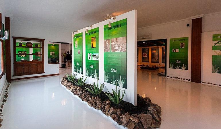 Museo Aloe Vera