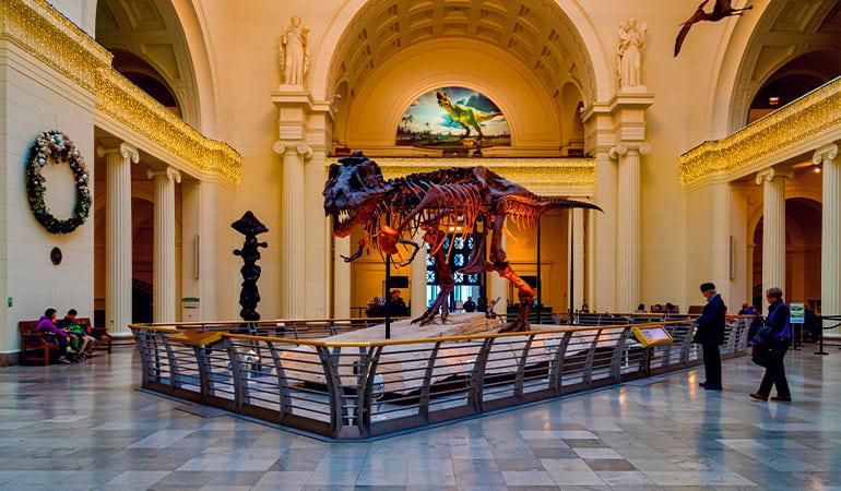 The Field Museum, uno de los mejores museos de Chicago
