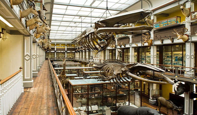 Museo de Historia Natural, uno de los mejores museos de Dublín